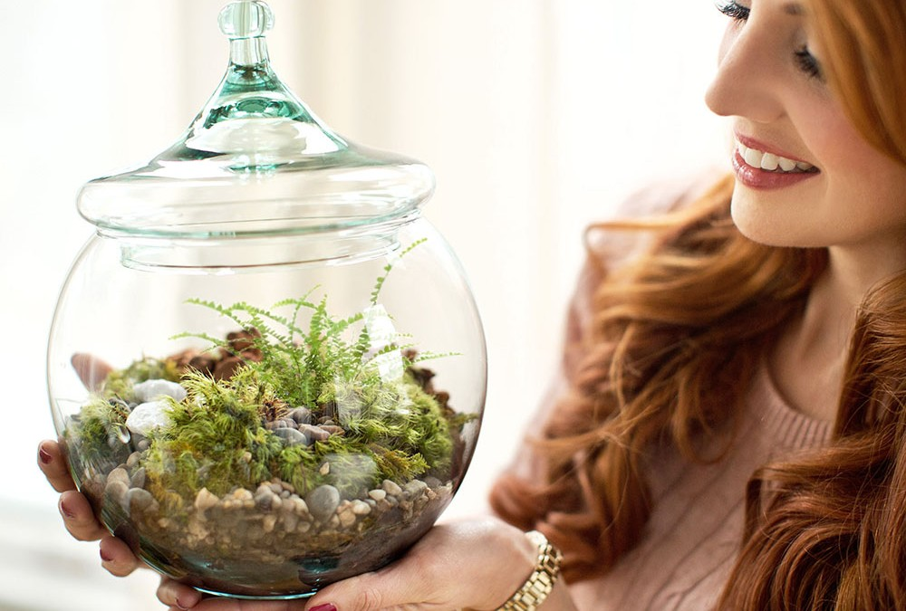 MY AMES U0026 OATES TABLETOP TERRARIUM